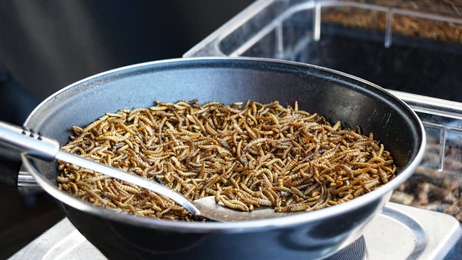 Mealworms By The Mouthful
